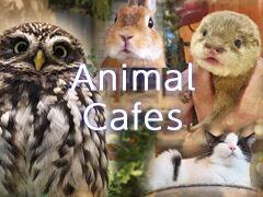 AnimalCafes