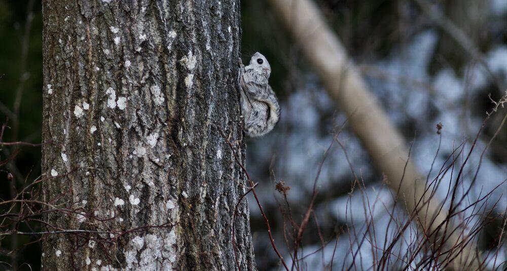 The Wildlife of Hokkaido